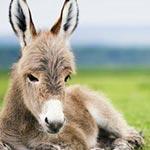 Lees het blog van dit goede doel voor dieren en lees hoe wij ezels helpen en steunen