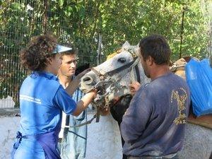 The donkey sanctuary financiert een gawf bezoek