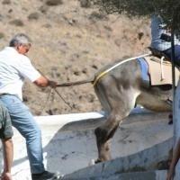 Mishandeling ezeltaxis
