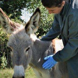Donkey Sanctuary doneert mondkapjes