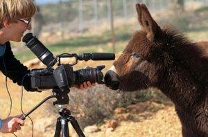 Filmpje Donkey CYPRUS