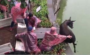 Actie tijgers verslinden ezel