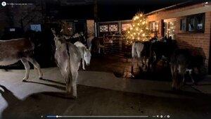Wat fijn dat de ezels in dit moeilijke jaar op u konden rekenen!