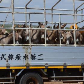 Chinezen slaan terug: extra fondsen nodig!