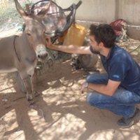Ezels nu ook beschermd in Somaliland