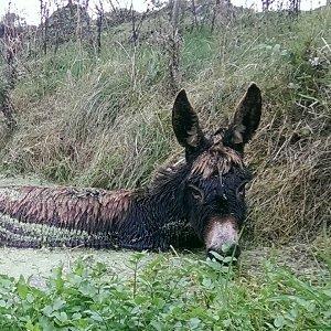 Zo kon Roma uit het moeras gered worden