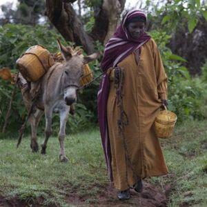 Ezels in het Ethiopische zonnetje…