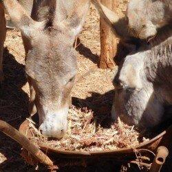 Een beter leven voor vrouwen, een beter leven voor ezels