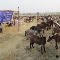 5.000 ezels vechten tegen de dorst