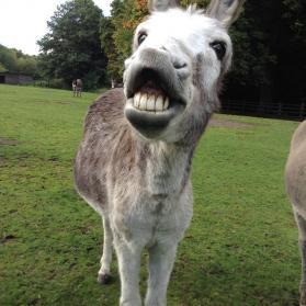 Wat gaat er schuil achter die lach?