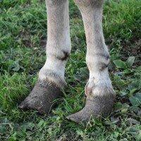 Wat doet u toch veel goed voor ezels!