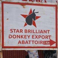 Enorme klap voor ezels (en hun eigenaren) in Kenia!