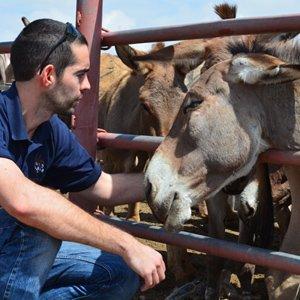 700 ezels wachten op de dood