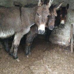 Voor een paar ezels kwam de redding te laat…