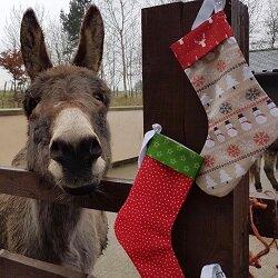 Fijne kerstdagen en een mooie jaarwisseling!