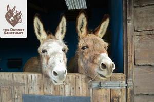 Wetenschappelijk bewijs: ezels hebben 's winters extra bescherming nodig