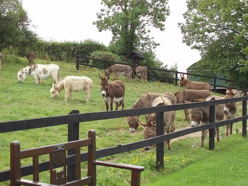 Ezels in Ierland in Nood - The Donkey Sanctuary