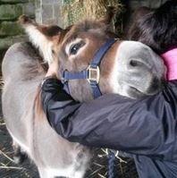 Muurbloem wordt ster - Nieuws  The Donkey Sanctuary Nederland
