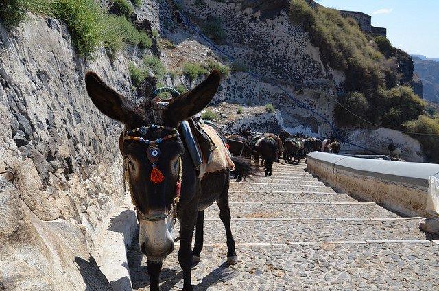 Dieren Helpen The Donkey Sanctuary