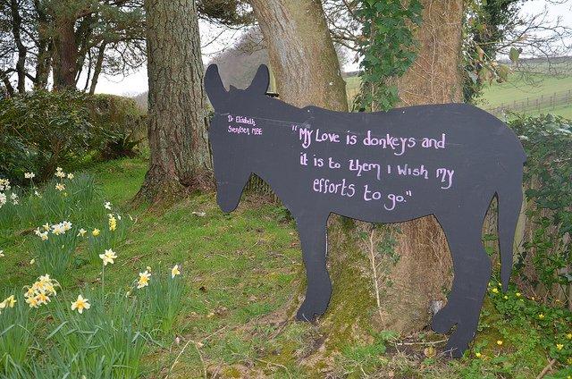 Dieren steunen - De donkey Sanctuary
