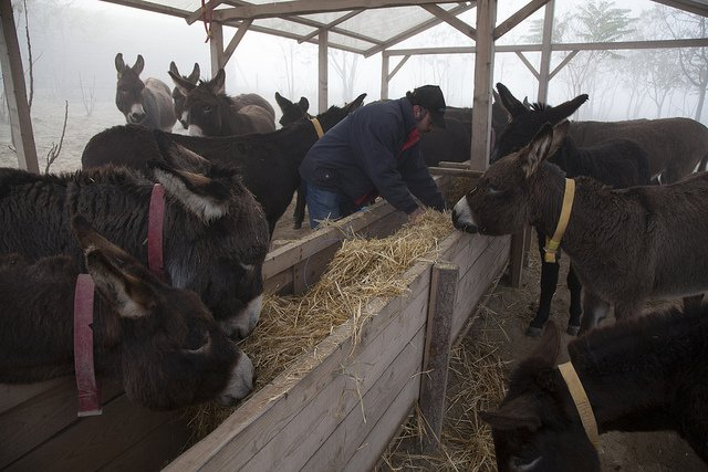 Ezel adopteren The Donkey Sanctuary