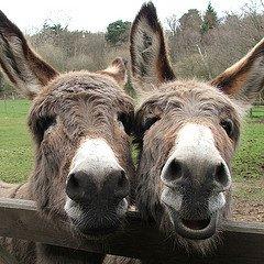 De Ezel opvang van de Donkey Sanctuary is in bijna heel de wereld bekend!