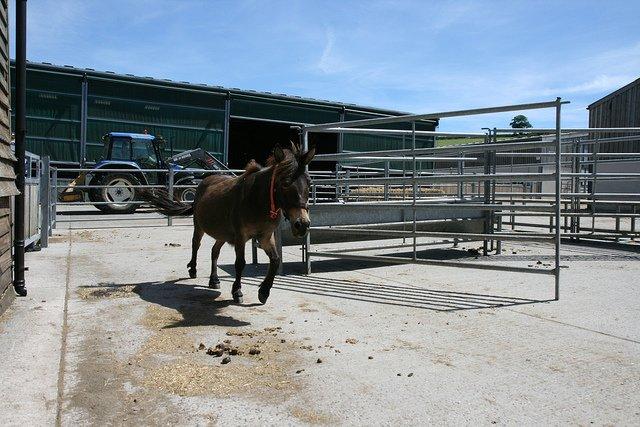 Ezelopvang Donkey Sanctuary