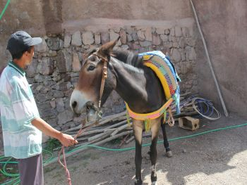 Mishandeling ezel voorbeeld The Donkey Sanctuary