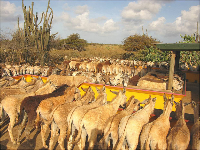 Wereldwijde ezelhulp Donkey Sanctuary