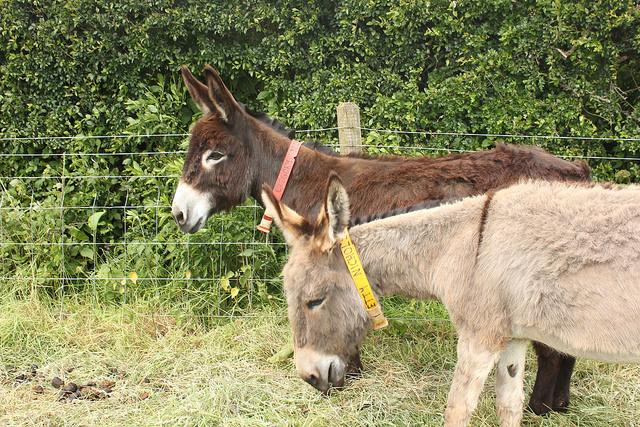 De Ezelweide Huisvesting voor Ezels The Donkey Sanctuary