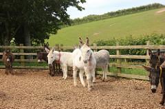 De Ezelweide The Donkey Sanctuary