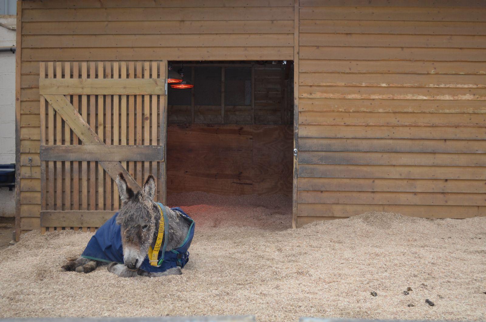 De verzorging van muildieren Donkey Sanctuary
