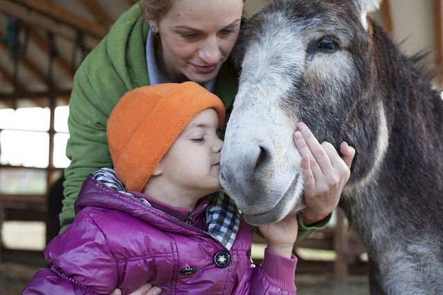 Doneren Goed doel - The Donkey Sanctuary