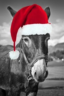Kerst cadeau The Donkey Sanctuary