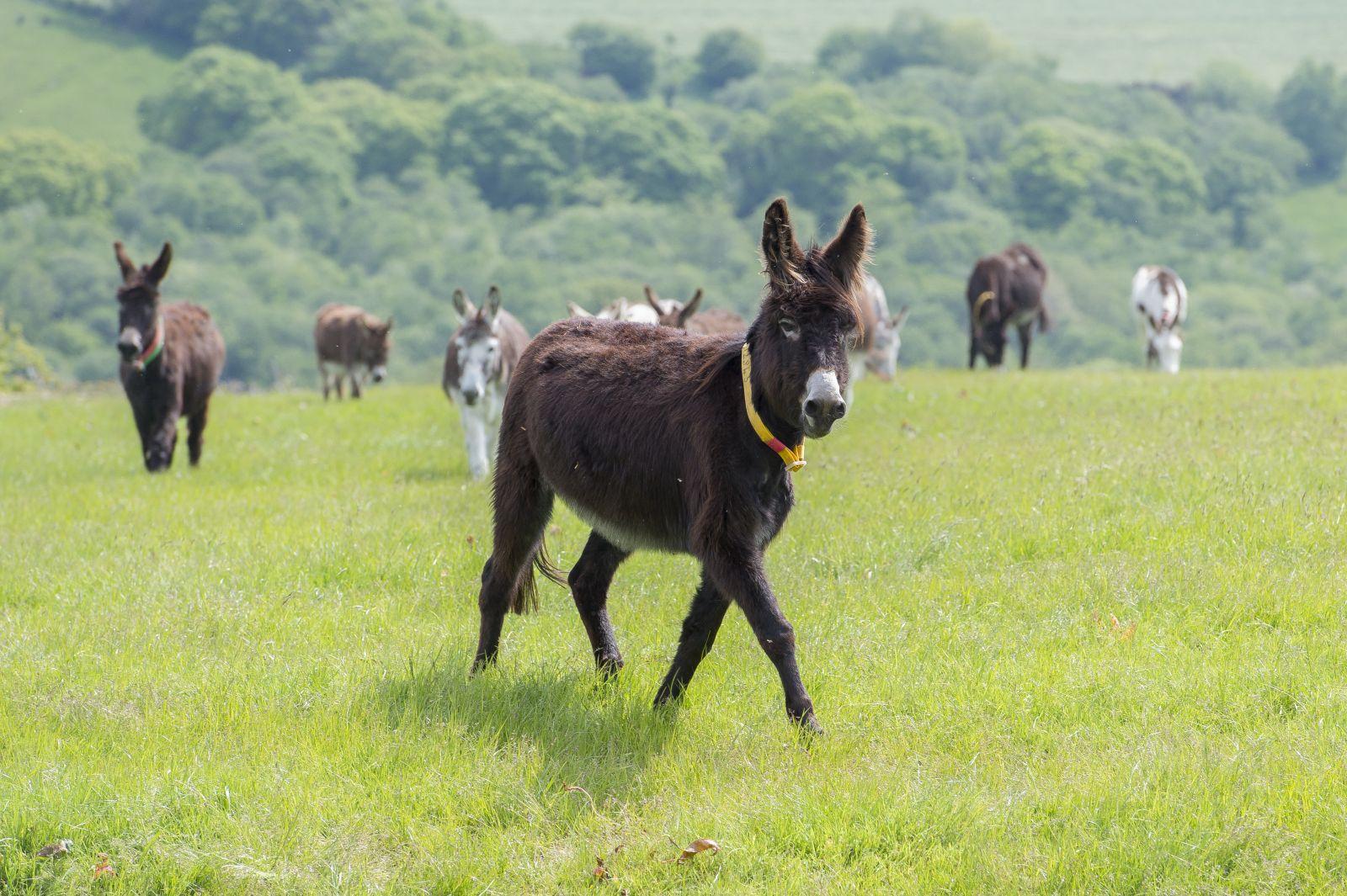 geschiedenis ezel donkey sanctuary