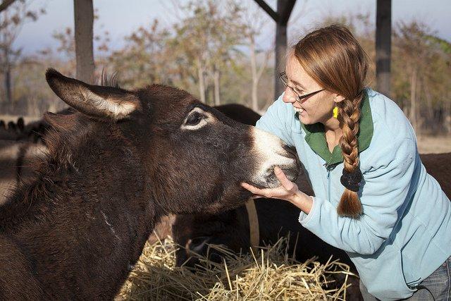 Goede doel voor dieren - deze vrouw steunt de donkey sanctuary