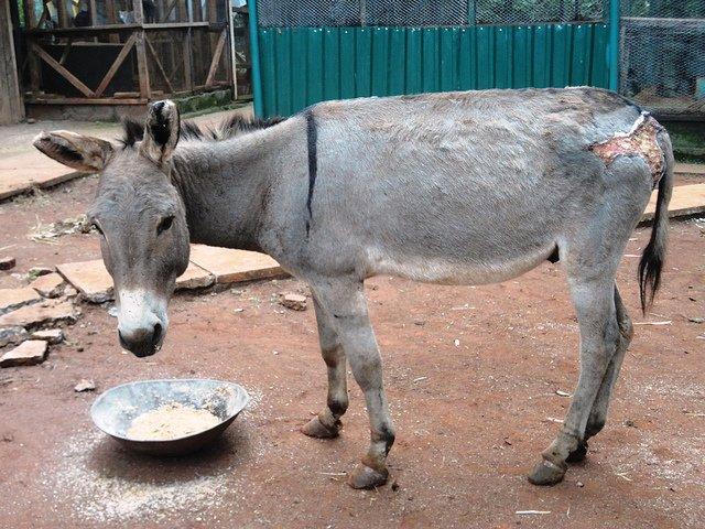 Mishandelde dieren The Donkey Sanctuary