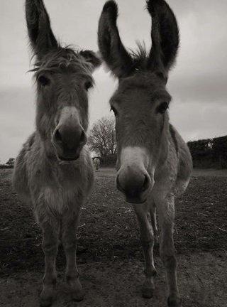 donkey sanctuary - marathon lopen