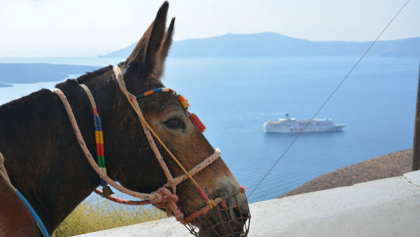 The Donkey Sanctuary - Santorini