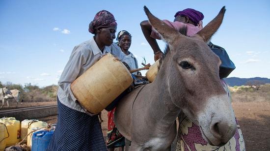 The Donkey Sanctuary - ezels zijn goed voor het milieu