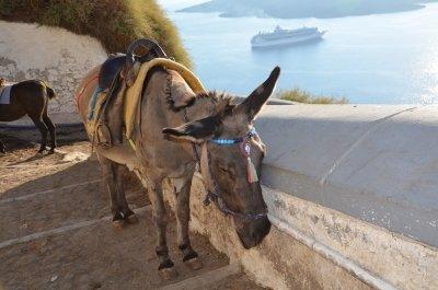 Ezeltoerisme in Santorini Donkey Sanctuary