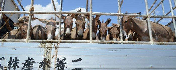 donkey sanctuary stop het stropen