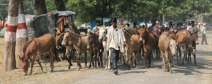 donkey sanctuary EZELLEVENS REDDEN IN ONTWIKKELINGSLANDEN