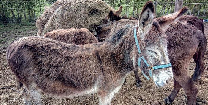 donkey sanctuary nieuwsbrief 2 2018 geredde ezels
