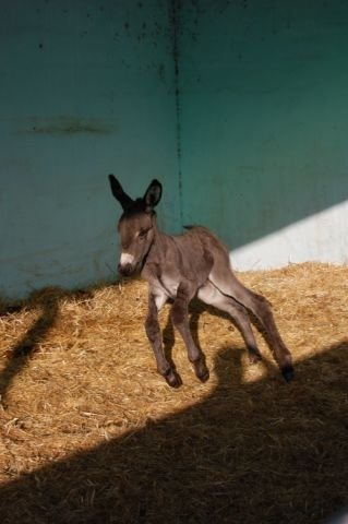 Veulen-Donkey-Sanctuary