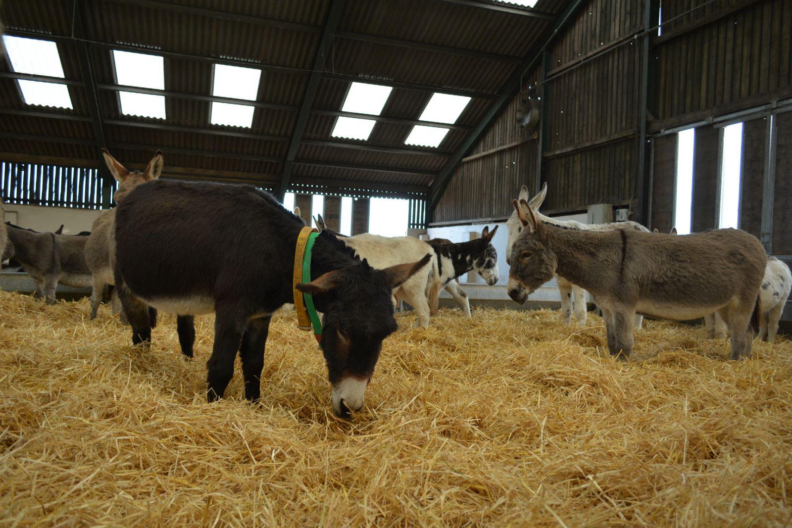 Stalling voor een ezel Donkey Sanctuary