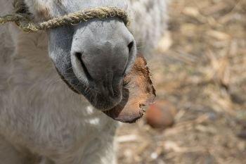 Ezel snack Donkey Sanctuary