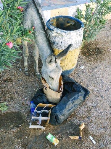 Ezel voeding giftig Donkey Sanctuary