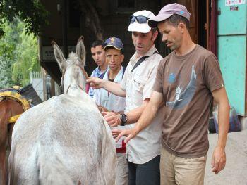 Ezel stichting Donkey Sanctuary
