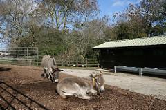 Tips voor de ideale stal Donkey Sanctuary
